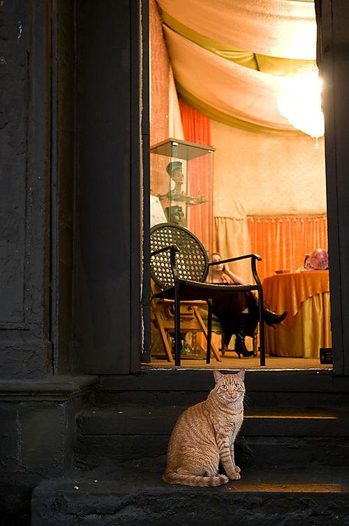 Psychic-cat