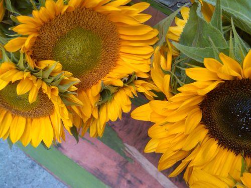 Rizoflowers