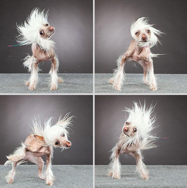 Shake-dogs-in-motion-carli-davidson-9-b