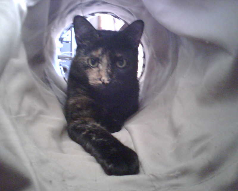 Kitty in her tunnel...